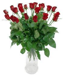 İzmit uluslararası çiçek gönderme  11 adet kimizi gülün ihtisami cam yada mika vazo modeli