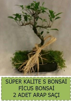 Ficus S Bonsai ve arap saçı  İzmit uluslararası çiçek gönderme