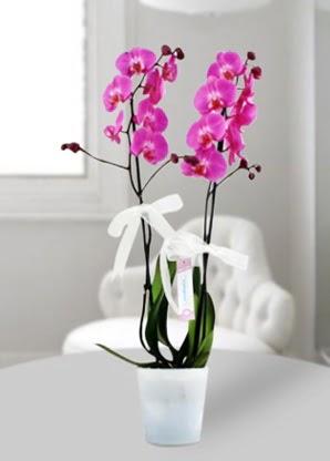 Çift dallı mor orkide  İzmit güvenli kaliteli hızlı çiçek