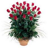 İzmit çiçek yolla  10 adet kirmizi gül cam yada mika vazo