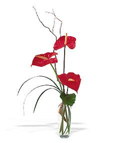 İzmit çiçek mağazası , çiçekçi adresleri  cam yada mika Vazoda 3 adet  antoryum
