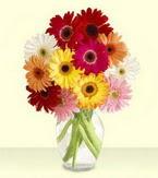 İzmit internetten çiçek siparişi  cam yada mika vazoda 15 özel gerbera
