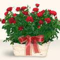 İzmit çiçek siparişi vermek  11 adet kirmizi gül sepette