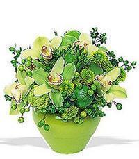 cam yada mika vazoda 5 adet orkide   İzmit çiçekçiler