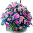 karisik mevsim kir çiçekleri  İzmit online çiçek gönderme sipariş