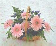 gerbera çiçeklerinde sepet   İzmit cicek , cicekci
