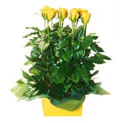 11 adet sari gül aranjmani  İzmit çiçekçiler