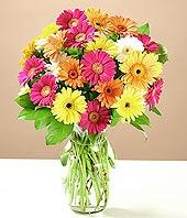 İzmit çiçek , çiçekçi , çiçekçilik  17 adet karisik gerbera