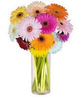 İzmit yurtiçi ve yurtdışı çiçek siparişi  Farkli renklerde 15 adet gerbera çiçegi