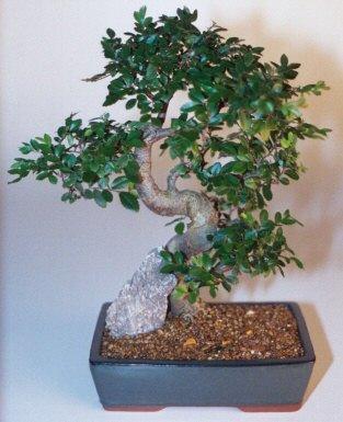 İzmit online çiçek gönderme sipariş  ithal bonsai saksi çiçegi  İzmit çiçek mağazası , çiçekçi adresleri