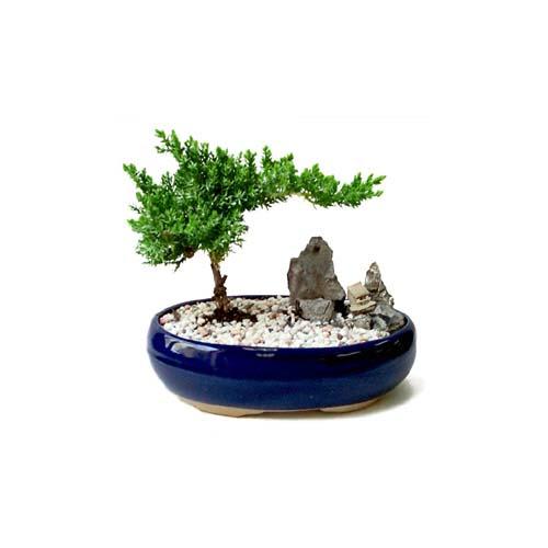 ithal bonsai saksi çiçegi  İzmit cicekciler , cicek siparisi