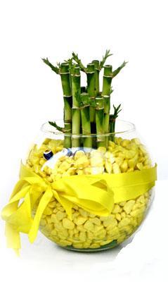 cam fanus içerisinde bambo  İzmit kaliteli taze ve ucuz çiçekler