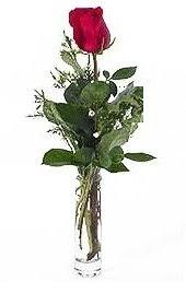 Vazo içerisinde 1 adet kirmizi gül  İzmit çiçek gönderme sitemiz güvenlidir
