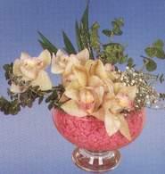 İzmit hediye çiçek yolla  Dal orkide kalite bir hediye