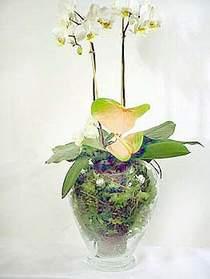 İzmit 14 şubat sevgililer günü çiçek  Cam yada mika vazoda özel orkideler
