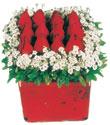 İzmit cicekciler , cicek siparisi  Kare cam yada mika içinde kirmizi güller - anneler günü seçimi özel çiçek