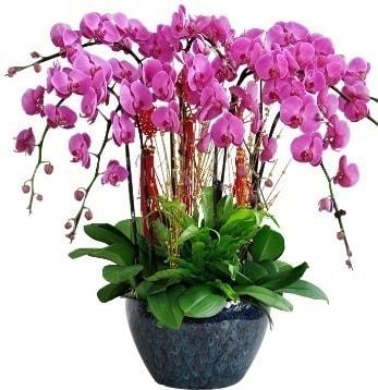 9 dallı mor orkide  İzmit çiçek gönderme