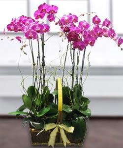 4 dallı mor orkide  İzmit çiçek siparişi sitesi