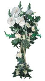 İzmit hediye çiçek yolla  antoryumlarin büyüsü özel