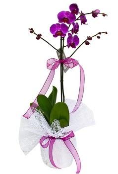 Tek dallı mor orkide  İzmit uluslararası çiçek gönderme