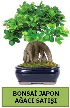Bonsai japon ağacı satışı  İzmit 14 şubat sevgililer günü çiçek