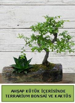 Ahşap kütük bonsai kaktüs teraryum  İzmit yurtiçi ve yurtdışı çiçek siparişi