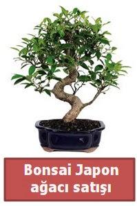 Japon ağacı bonsai satışı  İzmit çiçek mağazası , çiçekçi adresleri
