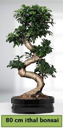 80 cm özel saksıda bonsai bitkisi  İzmit uluslararası çiçek gönderme