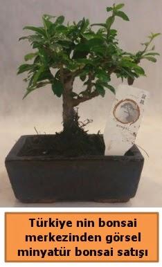 Japon ağacı bonsai satışı ithal görsel  İzmit cicek , cicekci