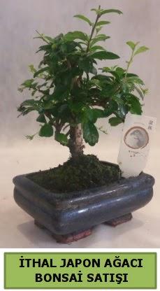 İthal japon ağacı bonsai bitkisi satışı  İzmit uluslararası çiçek gönderme