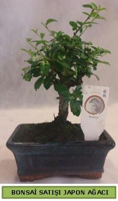 Minyatür bonsai ağacı satışı  İzmit cicekciler , cicek siparisi