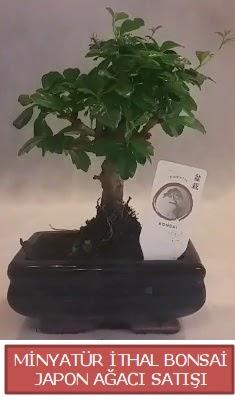 Küçük görsel bonsai japon ağacı bitkisi  İzmit anneler günü çiçek yolla