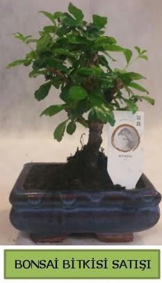 Bonsai ithal görsel minyatür japon ağacı  İzmit hediye sevgilime hediye çiçek