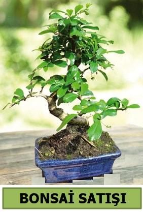 Çam bonsai japon ağacı satışı  İzmit 14 şubat sevgililer günü çiçek