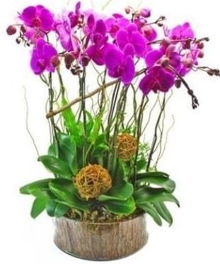 Ahşap kütükte lila mor orkide 8 li  İzmit kaliteli taze ve ucuz çiçekler