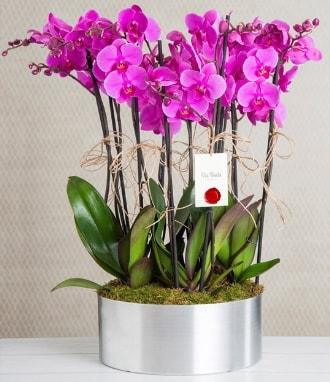 11 dallı mor orkide metal vazoda  İzmit online çiçek gönderme sipariş