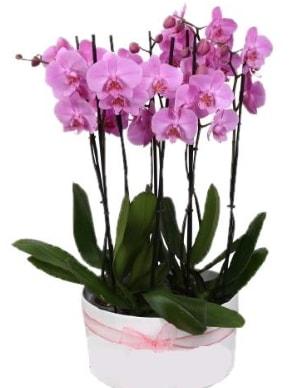 Beyaz seramik içerisinde 7 dallı mor orkide  İzmit uluslararası çiçek gönderme