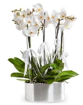 Beş dallı metal saksıda beyaz orkide  İzmit cicek , cicekci
