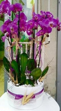 Seramik vazoda 4 dallı mor lila orkide  İzmit çiçek yolla , çiçek gönder , çiçekçi