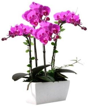 Seramik vazo içerisinde 4 dallı mor orkide  İzmit 14 şubat sevgililer günü çiçek