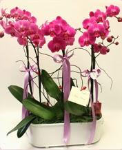 Beyaz seramik içerisinde 4 dallı orkide  İzmit hediye sevgilime hediye çiçek