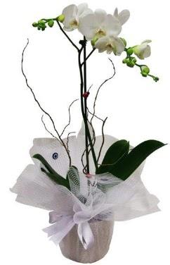 Tek dallı beyaz orkide  İzmit İnternetten çiçek siparişi