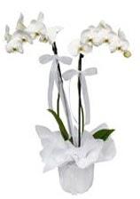 2 dallı beyaz orkide  İzmit çiçek siparişi sitesi