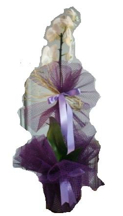 Tek dallı beyaz orkide süper kalite ithal  İzmit çiçek mağazası , çiçekçi adresleri