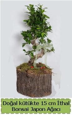 Doğal kütükte İthal bonsai japon ağacı  İzmit cicekciler , cicek siparisi