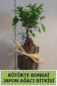 Kütük içerisinde doğal bonsai ağacı  İzmit uluslararası çiçek gönderme