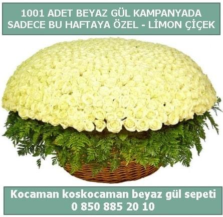 1001 adet beyaz gül sepeti özel kampanyada  İzmit online çiçek gönderme sipariş