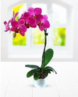 Tek dallı mor orkide  İzmit 14 şubat sevgililer günü çiçek