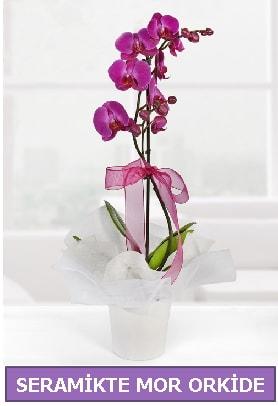 Seramik içerisinde birinci kalite tek dallı mor orkide  İzmit çiçek siparişi vermek