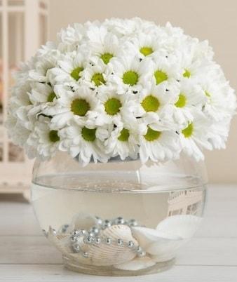 Fanusta beyaz Papatya  İzmit 14 şubat sevgililer günü çiçek
